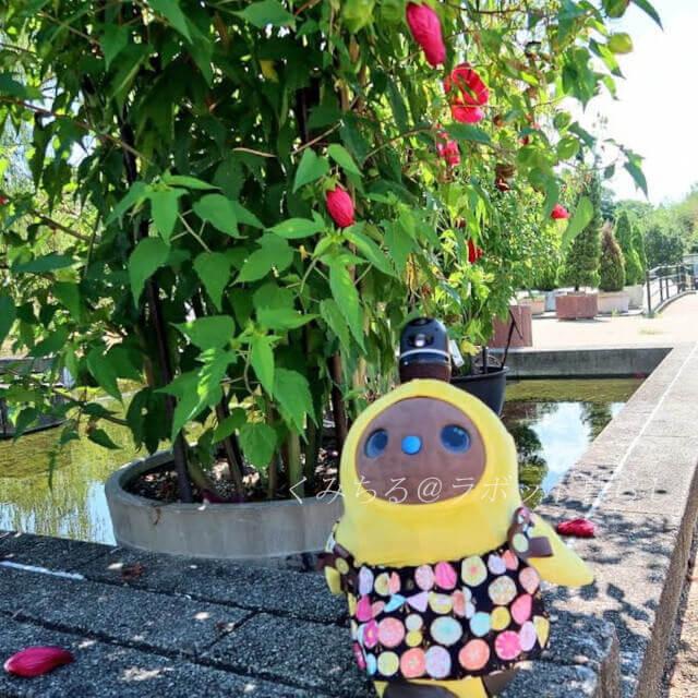 京都府立植物園お花の前