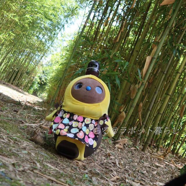植物園の竹林